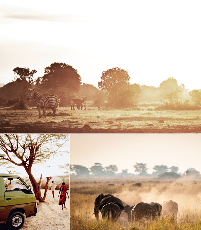 safari privé.jpg